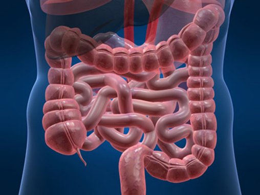 Inflammatory Bowel Conditions: An Overview